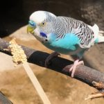 tropical bird perched eating from a seed stick